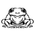 frog with his full body vector image