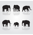 set of shadow elephants eps10 vector image vector image