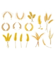 Cereal ears and grains set vector image
