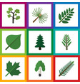 flat icon bio set of oaken jungle hickory and vector image vector image