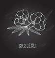 hand drawn broccoli vector image vector image