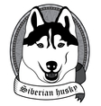 Siberian husky Portrait Isolated dog vector image