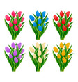 spring blooming tulip flower set vector image