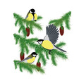 tits on fir branches vector image