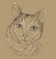 cat white and grey color in brown background vector image
