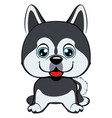 dog alaskan kli kai breed sitting icon flat vector image