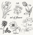 Hand drawing set of flowers Iris calla lily tulip vector image