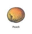 hand-drawn juicy ripe peach vector image vector image