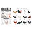 poultry farming infographic template chicken vector image vector image