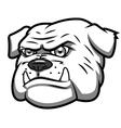 Angry bulldog 2 vector image vector image