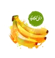 Banana fruit Bunch of bananas vector image