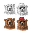 bear head vintage color engraving vector image vector image