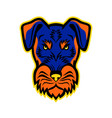 jagdterrier front mascot vector image vector image