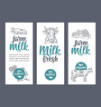 template poster or label with cow and clover farm vector image
