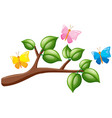 butterflies flying over the branch vector image