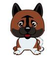 dog american akita breed laughs with his tongue vector image