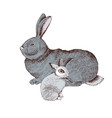 hand drawn rabbit and bunny vector image vector image