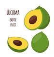 lucuma exotic fruit organic healthy superfood vector image vector image