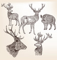 set of detailed hand drawn animals vector image vector image