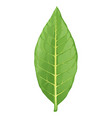 tobacco leaf isolated vector image vector image