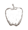 apple fruit draw vector image vector image