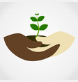 human hand holding green small tree vector image