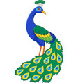 cartoon funny peacock vector image