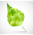 Concept background of green birch leaf vector image vector image