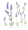 provence flowers collection set of lavender vector image vector image