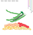 Green Beans with Vitamin C K A and B vector image vector image