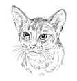 monochrome abyssinian cat vector image