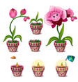 stages of growth of magical pink flower with face vector image vector image