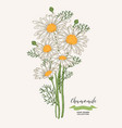 chamomile flowers rustic bouquet design hand vector image vector image