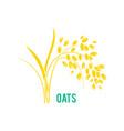 oats cereals grain vector image vector image