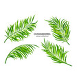 tropical chamaedorea leavesset plants isolated vector image vector image