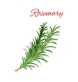 Rosemary culinary herb branches icon vector image