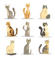 collection different cats breeds cute pet vector image vector image
