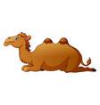 cute camel cartoon vector image vector image