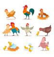 cartoon chicken chick with eggs hen and rooster vector image