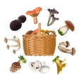 Collection of various species edible mushrooms and vector image
