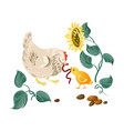 farm white hen give ground worm to chicken vector image vector image