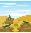 Lizard iguana in desert vector image vector image