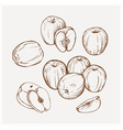 Set of drawing apples Golden delicious vector image vector image