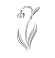 snowdrop isolated on the white vector image vector image