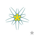 Edelweiss flower simple logo vector image