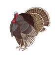 hand drawn turkey vector image vector image
