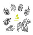 hops hand drawn vector image