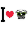 I love pug with green hipster glasses vector image