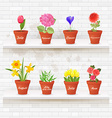 vintage collection of planted different lovely vector image