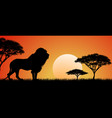 big african lion vector image